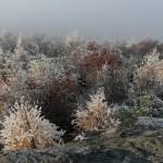 noch herrscht Frost